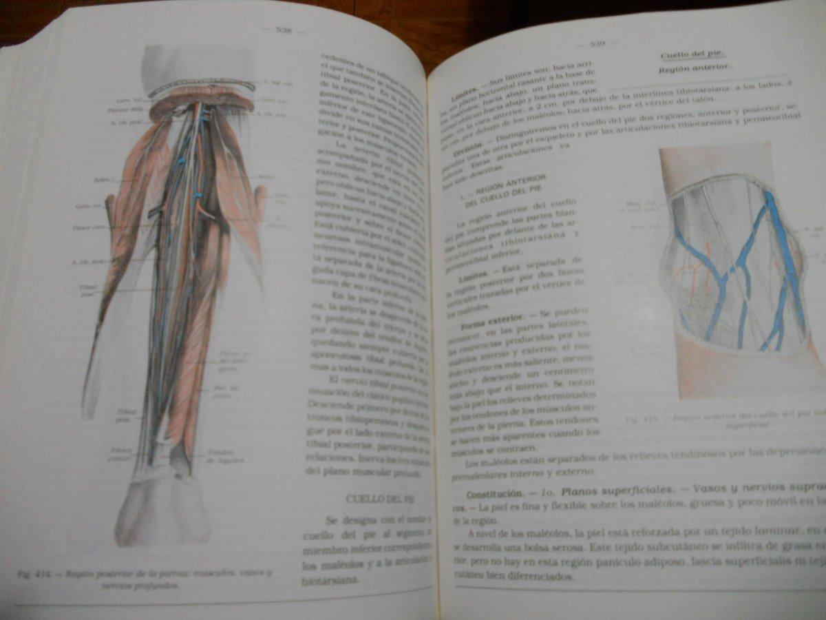 Anatomia Humana Descriptiva Topografica Y Funcional Rouviere ...