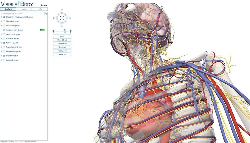 Vistoso Libre 3d Anatomía Festooning - Anatomía de Las Imágenesdel ...