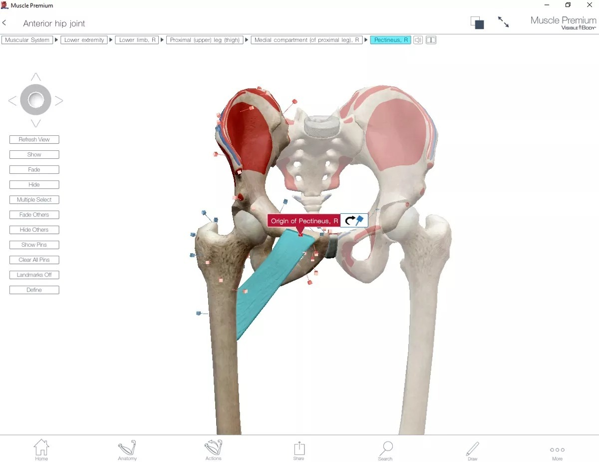 Atractivo Hombre Visibles Modelo De Anatomía Bosquejo - Anatomía de ...
