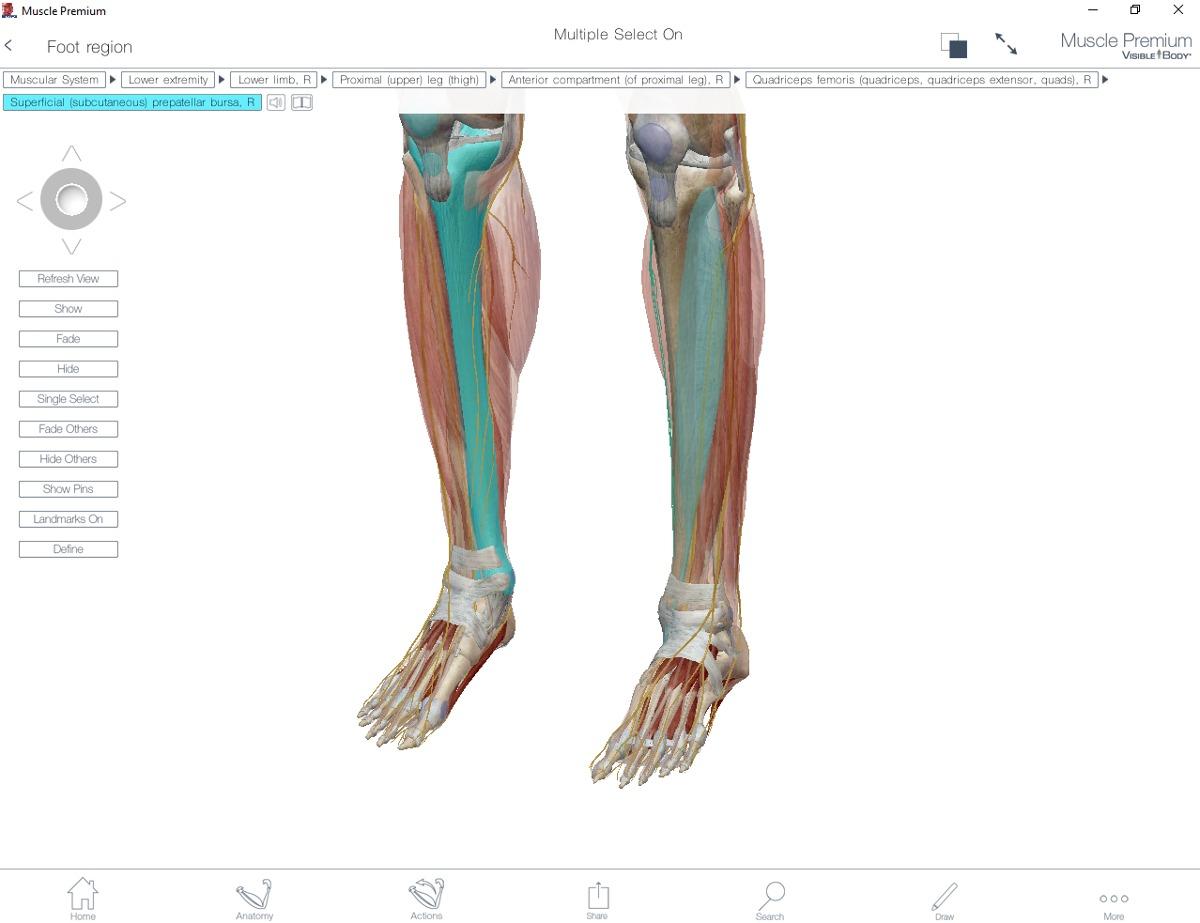 Atractivo Cuerpo Visible Anatomía Humana 3d Atlas Descarga Gratuita ...