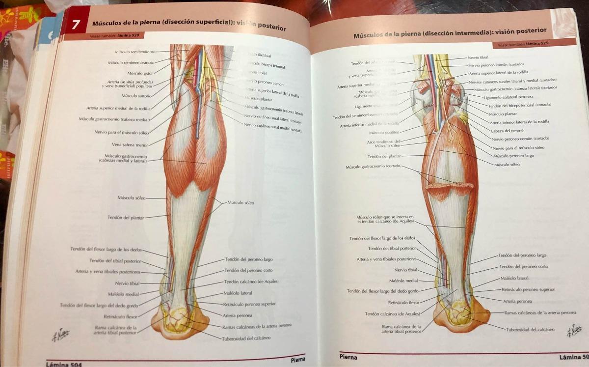 Anatomia Humana - Frank Netter Original Con Codigo - $ 50.000 en ...