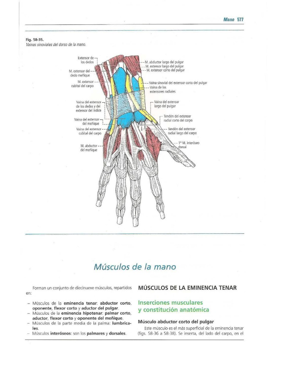 Anatomia Humana Latarjet - 4 Edicion - 2 Tomos- Oferta Digi ...