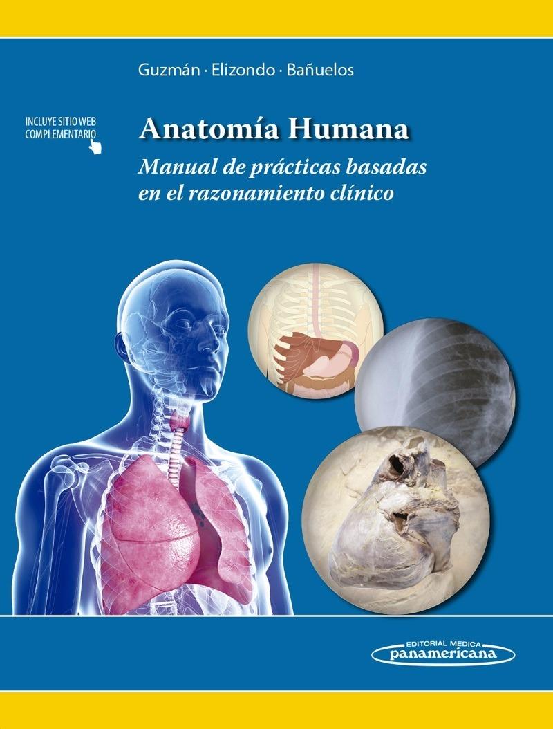 Encantador La Práctica Anatomía Humana Inspiración - Anatomía de Las ...