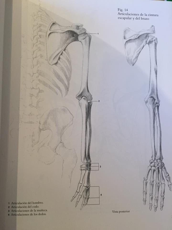 Perfecto Libros De Anatomía Humana Para Artistas Composición ...