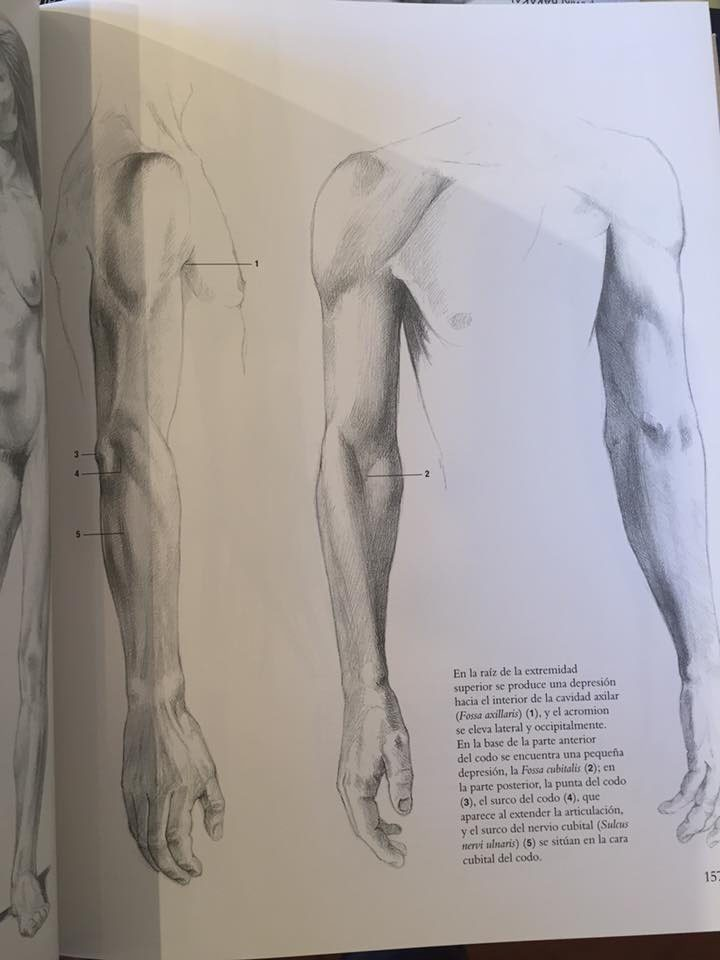 Encantador Modelos De Anatomía Para Artistas Patrón - Anatomía de ...
