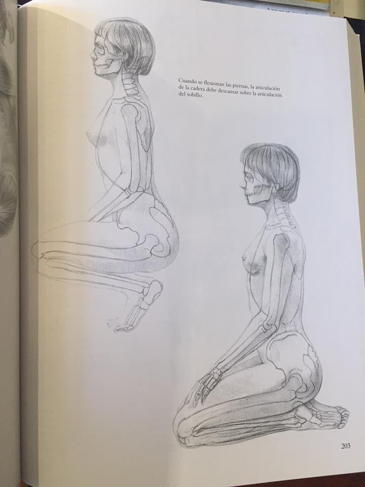 Bonito Referencias De Anatomía Para Artistas Fotos - Anatomía de Las ...