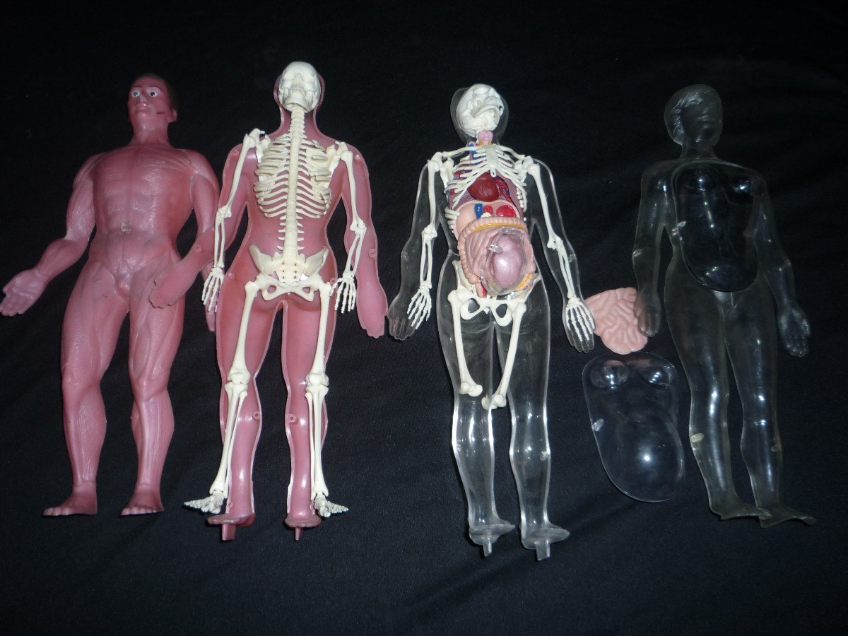 Anatomia Humana Serima Badalona 70\'s Cuerpo Humano - $ 900,00 en ...