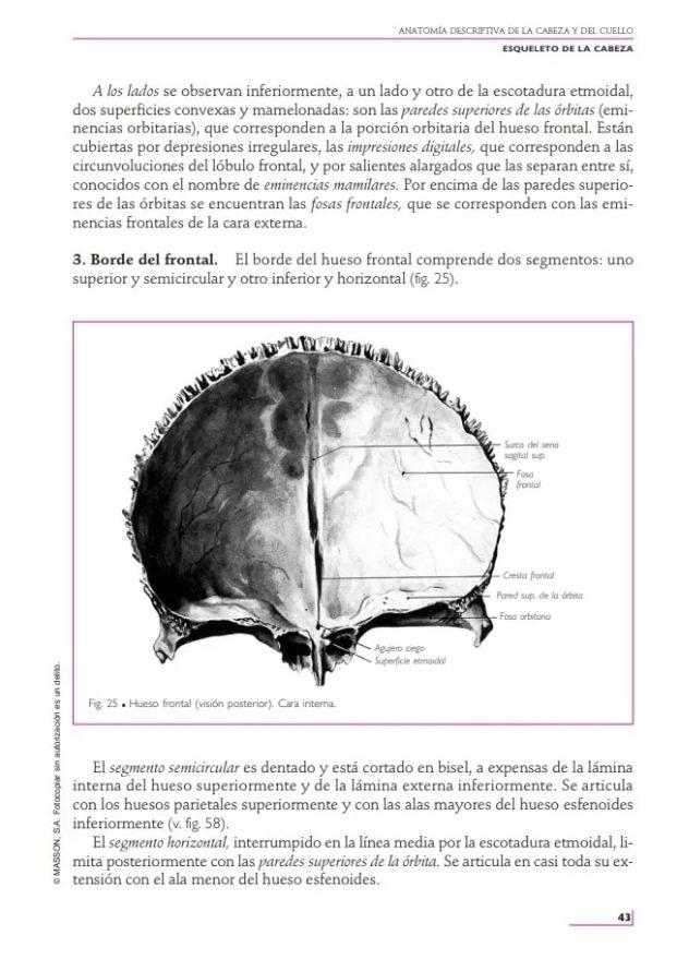 Anatomía Humana. Tomo 1: Cabeza Y Cuello 11va Edición Oferta - $ 69 ...