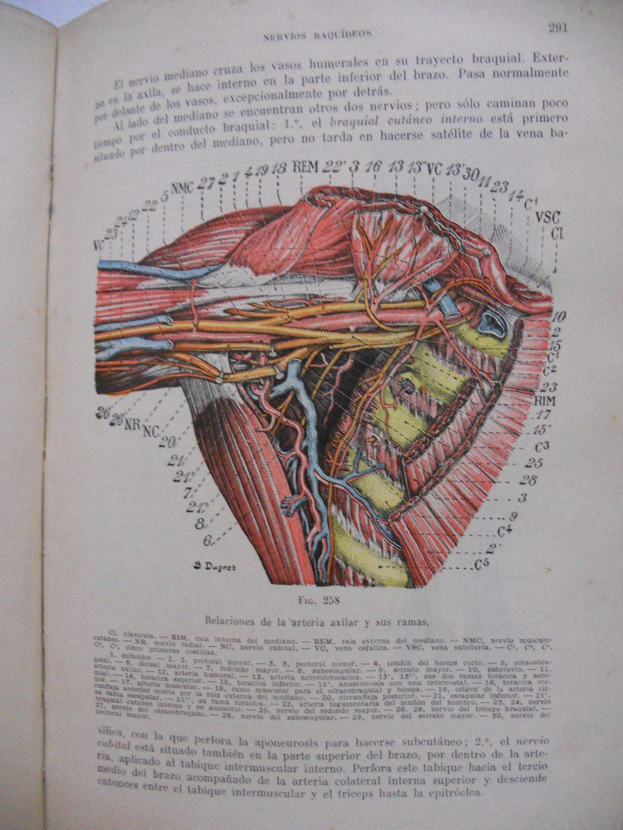 Lujo Universidad De Utah Anatomía Ideas - Imágenes de Anatomía ...