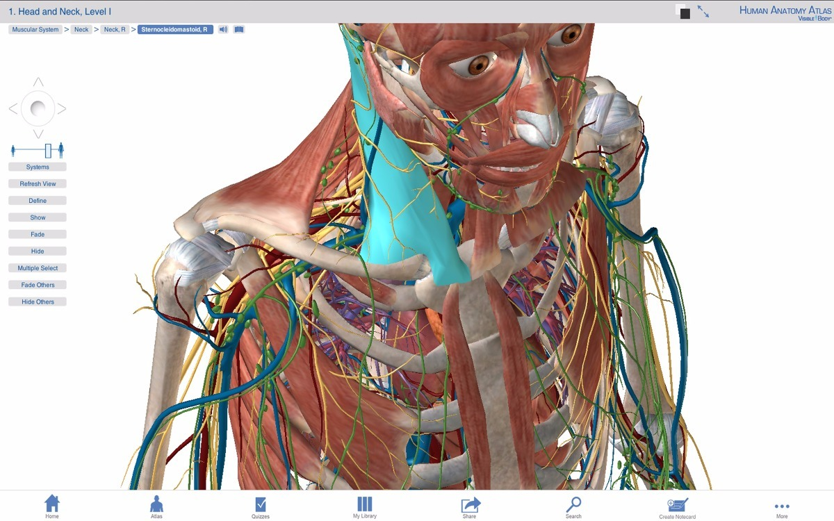 Anatomia Humana Visible Body Atlas 3d Adroid Celular Tablet - $ 149 ...