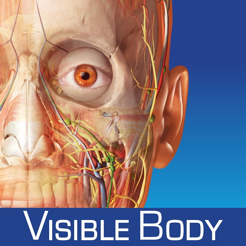 Anatomia Humana Visible Body Soft 3d Muscle Premium Digital - $ 189 ...