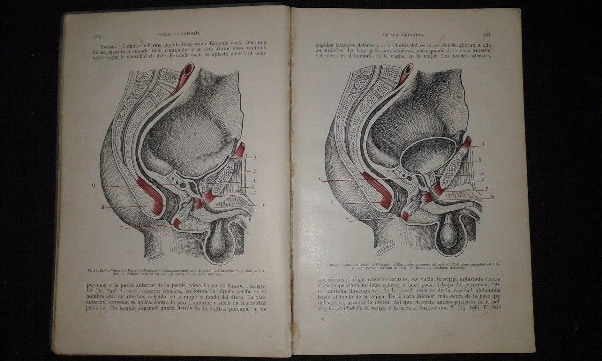 Anatomia Humana Y Embriologia Dr. J. De La Villa - $ 144,00 en ...