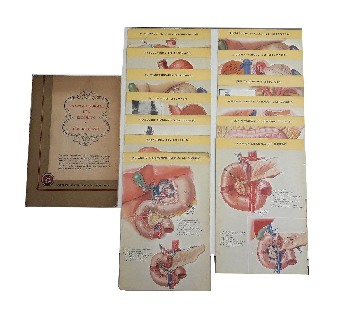 Anatomia Normal Estomago Y Duodeno 13 Laminas A Todo Color - $ 28,99 ...