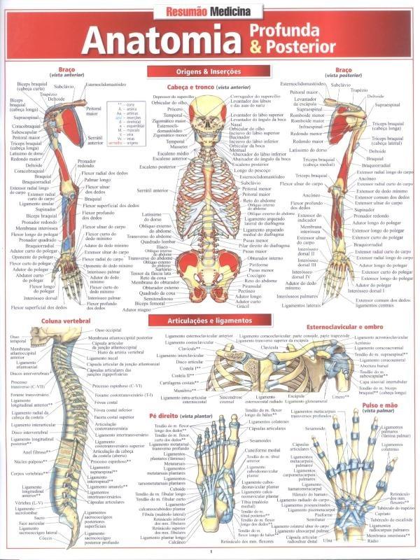 Anatomia Profunda Posterior - R$ 18,31 em Mercado Livre