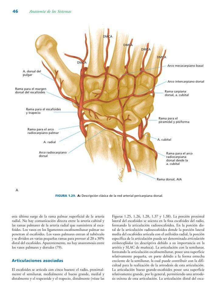 Anatomía Quirúrgica De La Mano Y Extremidad Superior - $ 768.000 en ...