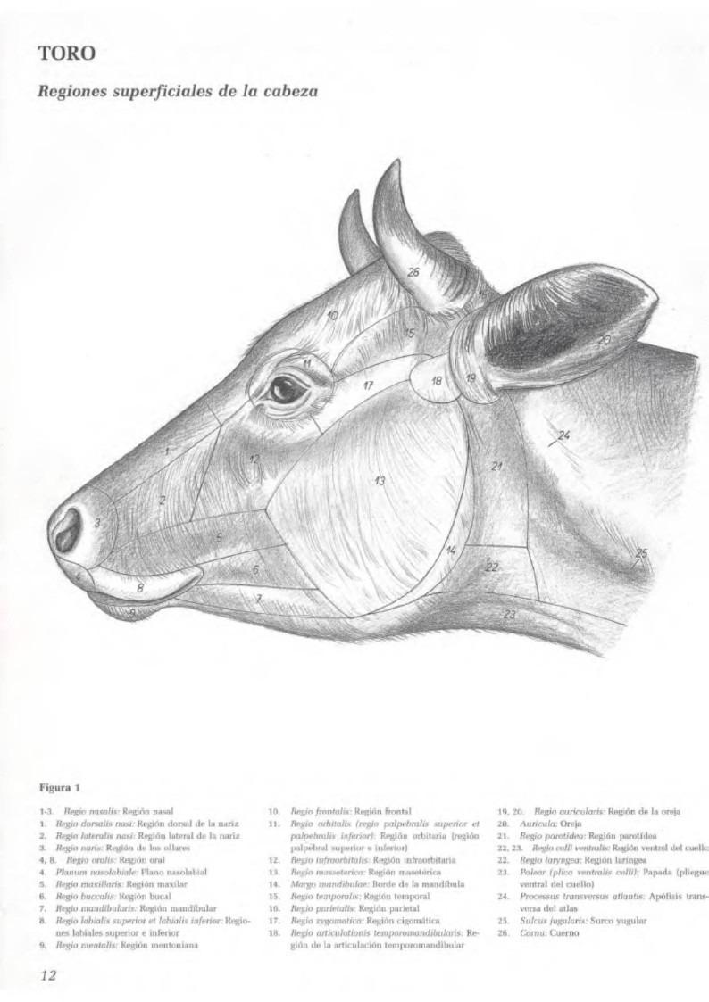 Anatomia Topografica De Los Animales Domesticos Tomo 1 Pdf - Bs. 3 ...
