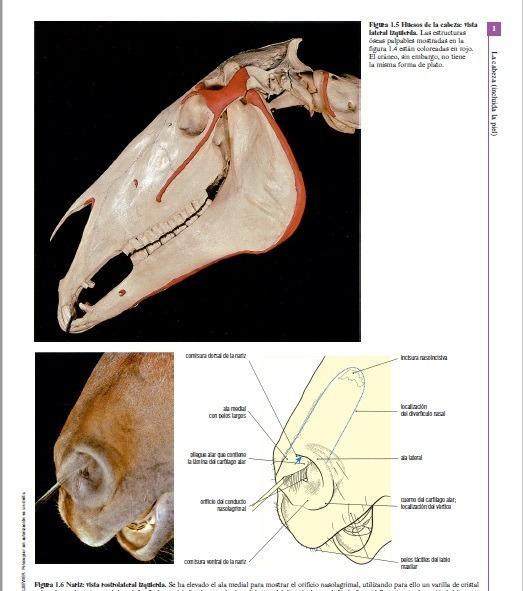 Anatomia Veterinaria El Caballo Pdf - $ 2.350 en Mercado Libre