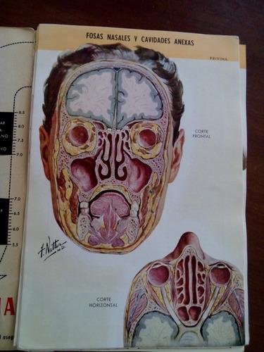 anatomia y anatomopatologia de las fosas nasales netter