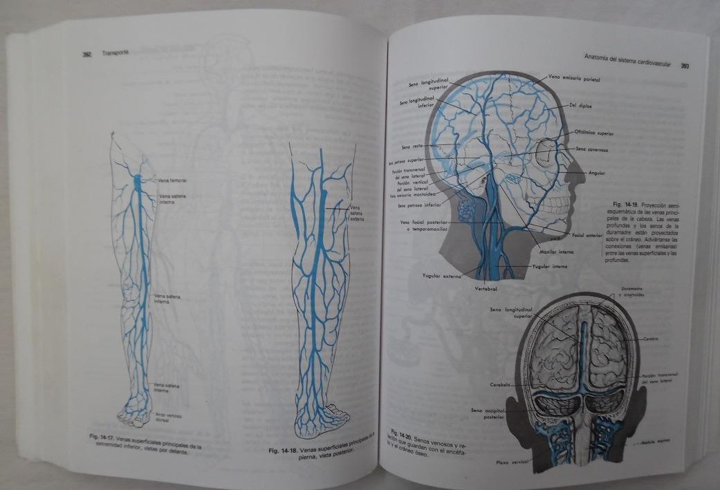 Dorable Mcgraw Animaciones Colina Anatomía Y Fisiología Adorno ...
