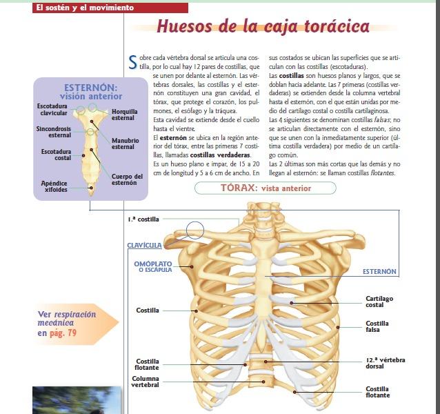 Anatomia Y Fisiologia Del Cuerpo Humano - Bs. 5.000,00 en Mercado Libre