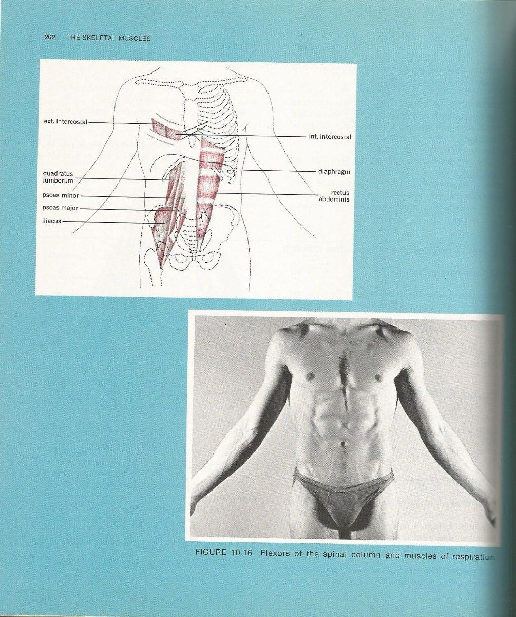Anatomía Y Fisiología Humana. James E. Crouch. - $ 400.00 en Mercado ...