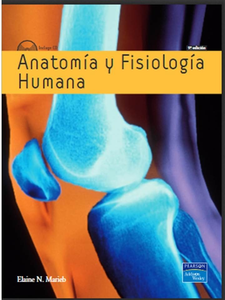 Excepcional Anatomía Humana Y Fisiología Pdf Molde - Imágenes de ...
