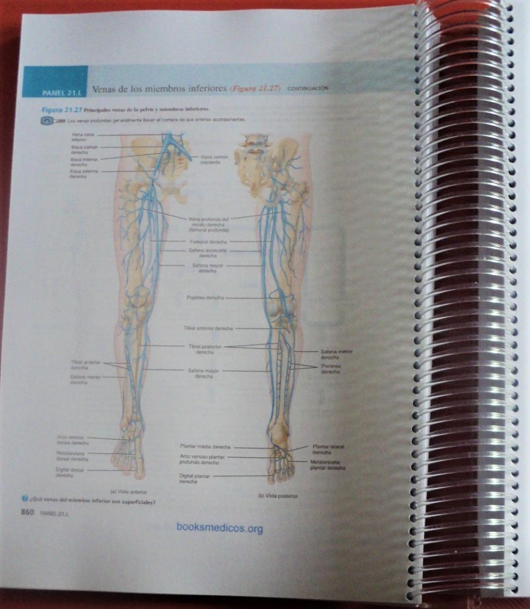 Bonito Definición De Lo Profundo De La Anatomía Inspiración ...