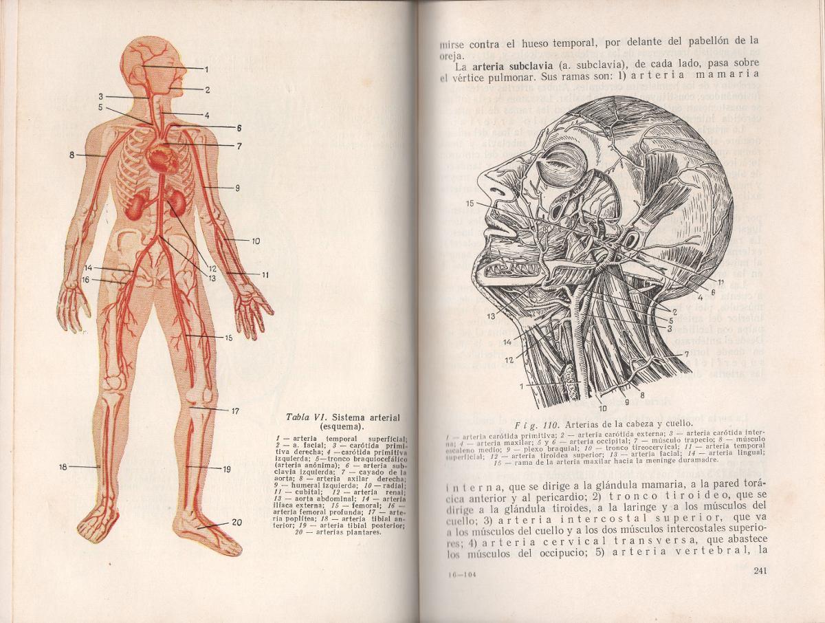 Bonito Guía De Estudio Para La Anatomía Y Fisiología Humana Responde ...