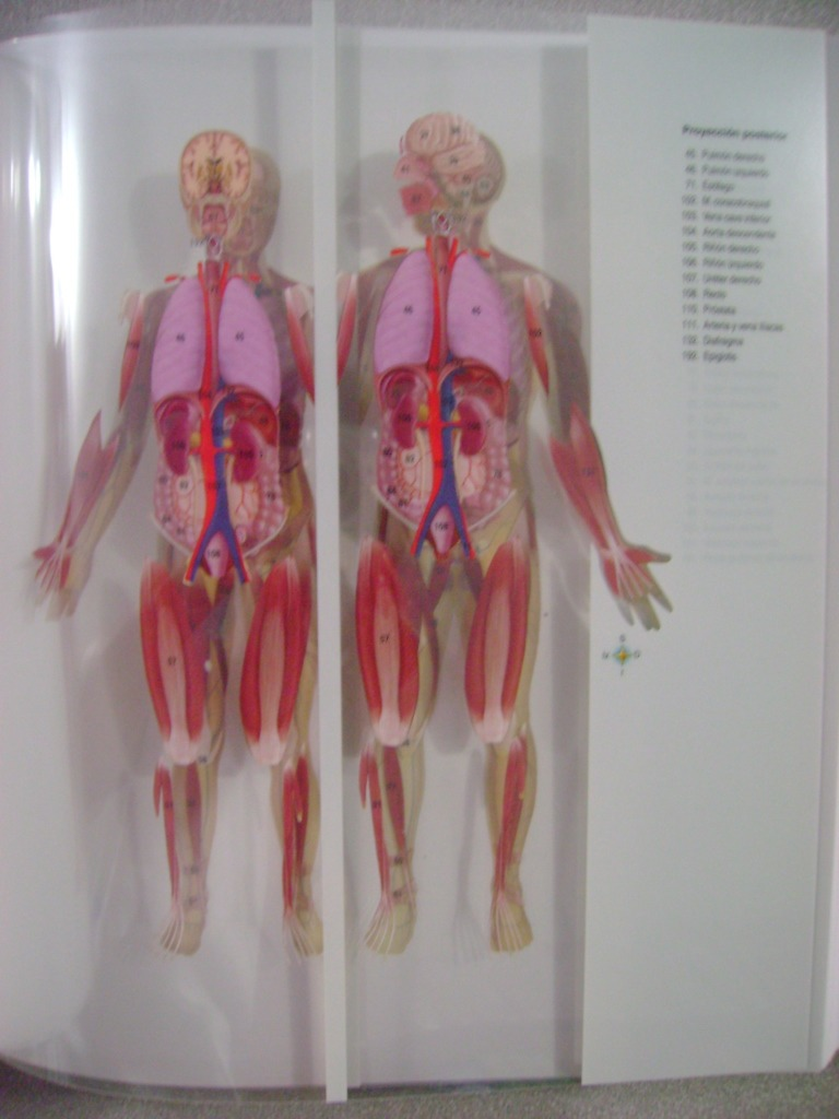 Anatomía Y Fisiología (incuye Evolve) - Thibodeau - Elsevier ...