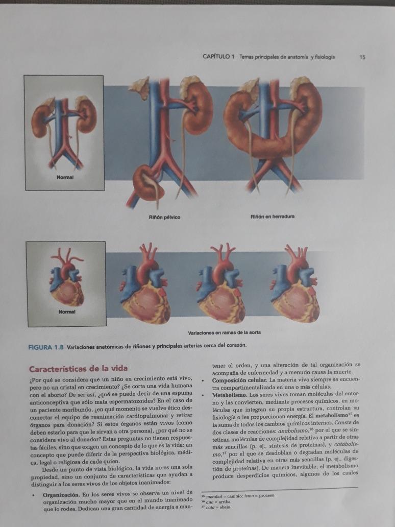 Anatomia Y Fisiologia Saladin 6ed - $ 28.000 en Mercado Libre