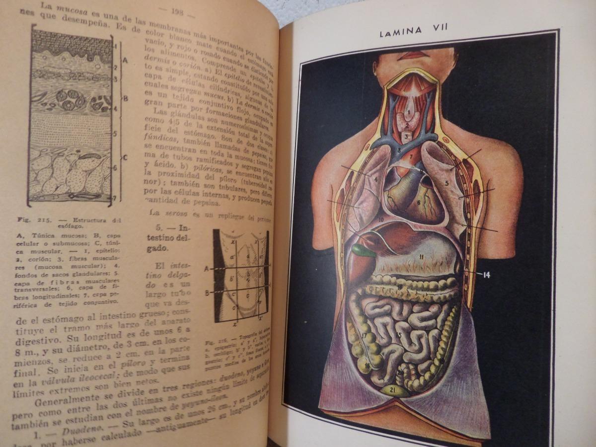 Anatomia Y Fisiologia,ciclo Basico, Casanave,1943,ilustrado - $ 365 ...
