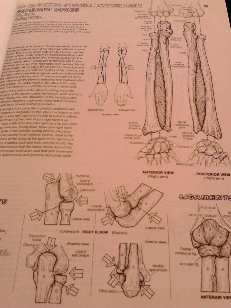 The anatomy coloring book kapit - Anatomy Coloring Book Kapit Elson 2 Edic Medicina Anatomia