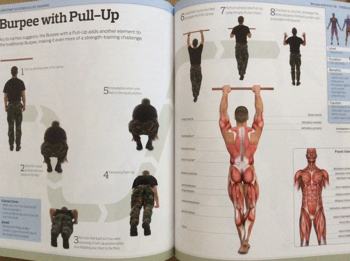 Perfect The Strength Training Anatomy Workout Ornament - Human ...