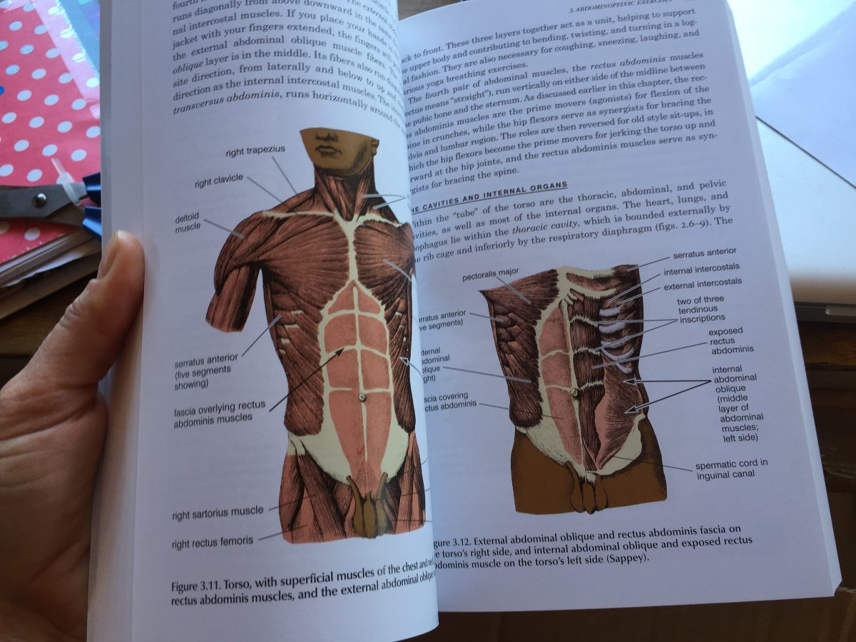 Anatomy Of Hatha Yoga De H. David Coulter - $ 20.000 en Mercado Libre