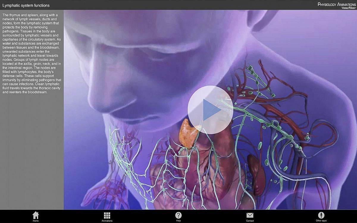 Anatomy Physiology 3d Organon Anatomy Physiology Animation ...
