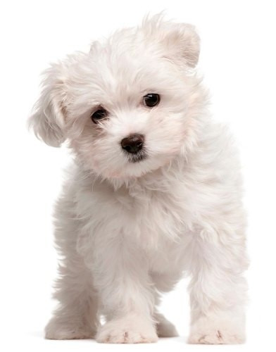 angels eyes natural 75g para cães + dosador grátis