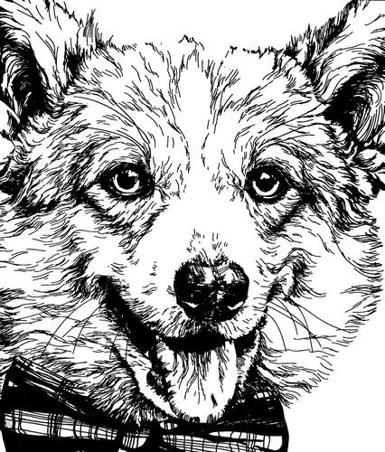 animais silvestres fantásticos reino animal 3 livro colorir