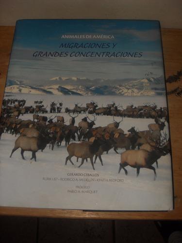 animales de américa migraciones y grandes concentraciones