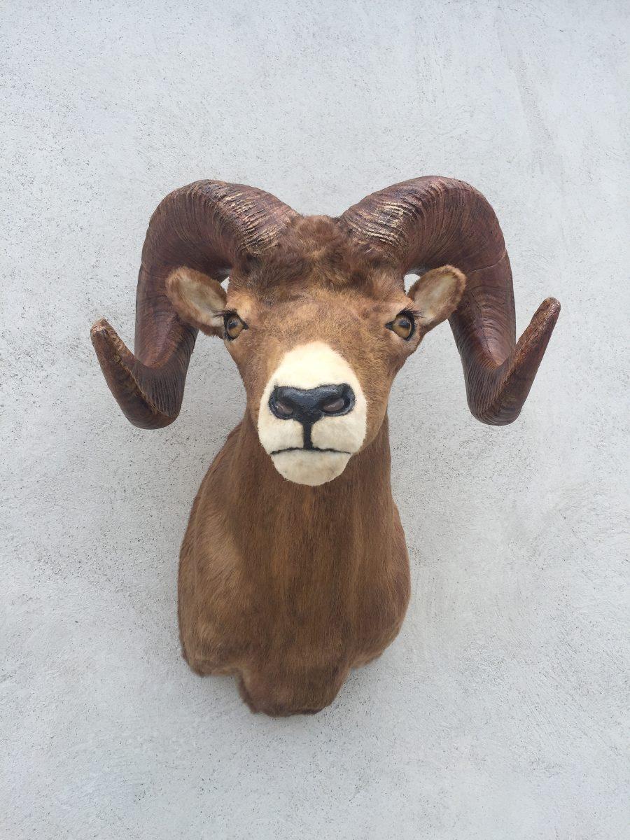 Animales disecados 100 artificiales borrego cimarron - Cabezas de animales decoracion ...