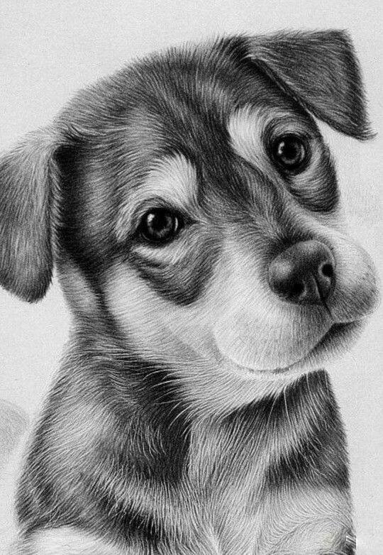 Animales Perros Lápiz Profesional Dibujo Tamaño Fotografía