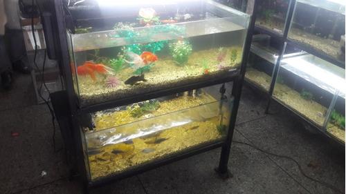 anti ich mancha blanca para peces de acuarios