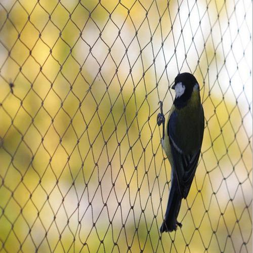 anti pássaro planta planta fruit pássaro prevenção jardim ma