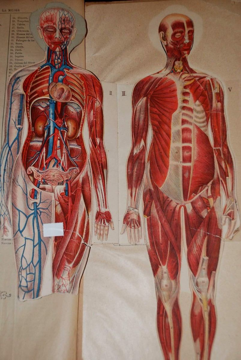 Antigua Anatomia De La Mujer Laminas Medicina Humana 1840 - $ 75.000 ...