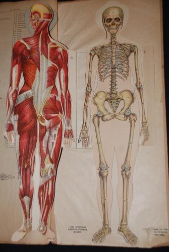 antigua anatomia de la mujer laminas medicina humana 1840