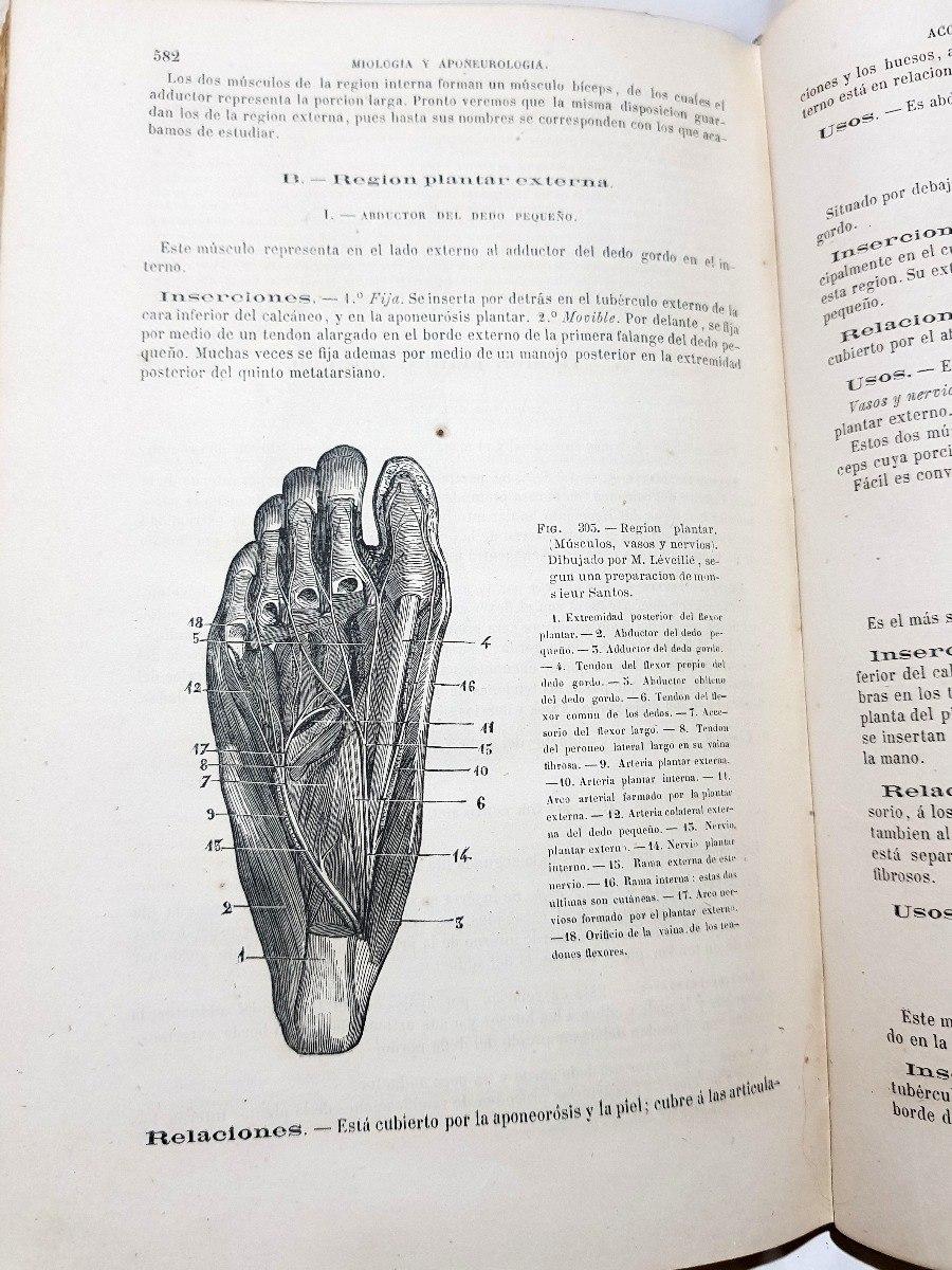 Atractivo Tarjetas De Estudiar La Anatomía Modelo - Imágenes de ...