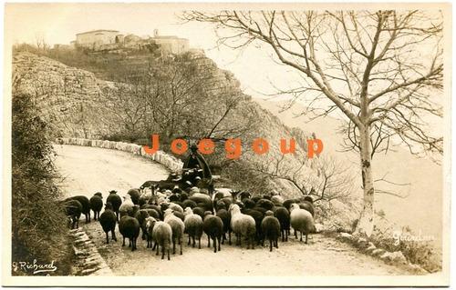 antigua foto postal inglesa pastor y sus ovejas