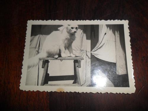 antigua fotografia recuerdo chivilcoy gato gatito escalera