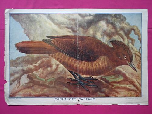 antigua lamina coleccion billiken cachalote castaño
