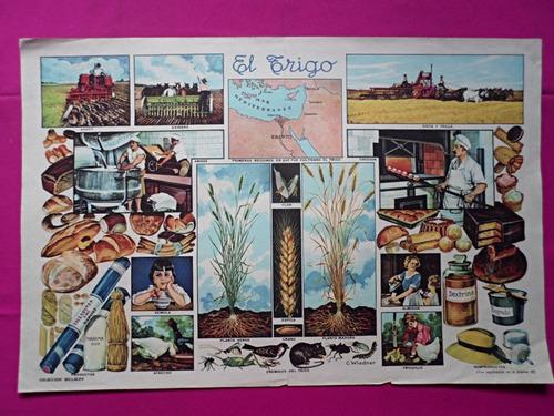 antigua lamina coleccion billiken el trigo