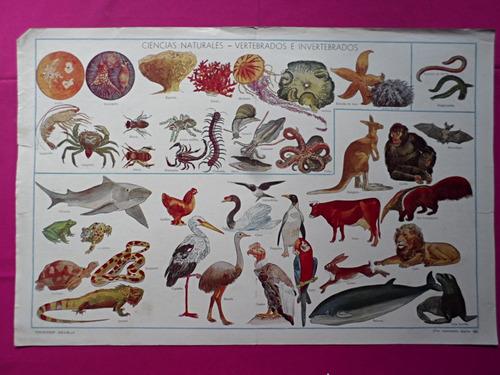 antigua lamina coleccion billiken vertebrados e invertebrado